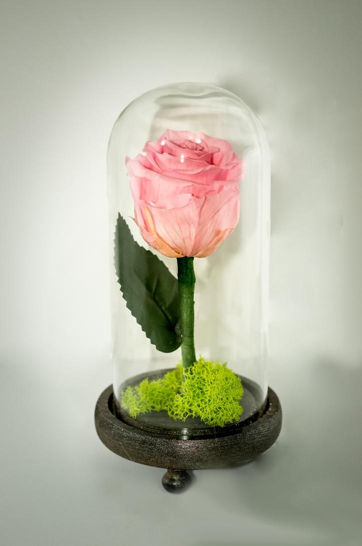 trandafir-nemuritor-roz-1-no-logo.jpg