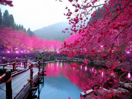 japan-in-full-bloom.jpg